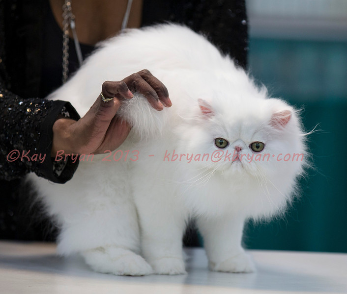 CatShow2014066_1.jpg