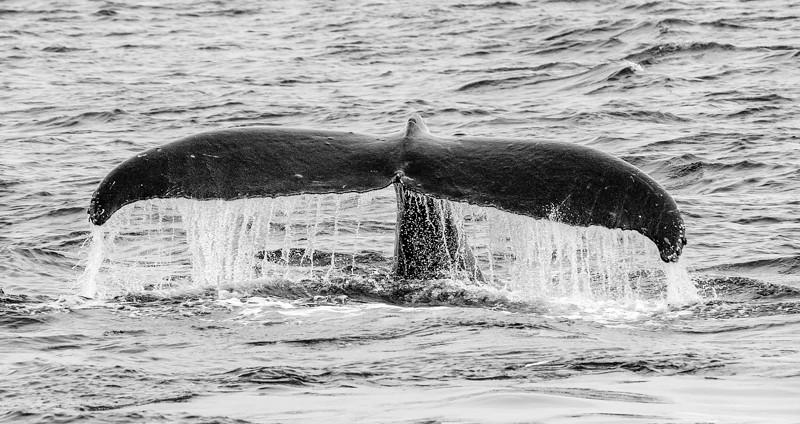 AK_Whales-1.jpg