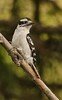 0027 - Birds by home feeder 5-16-13 (81 of 84)-Edit-Edit
