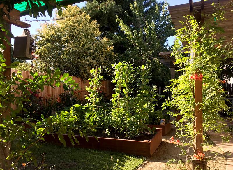 Garden July 1.jpg