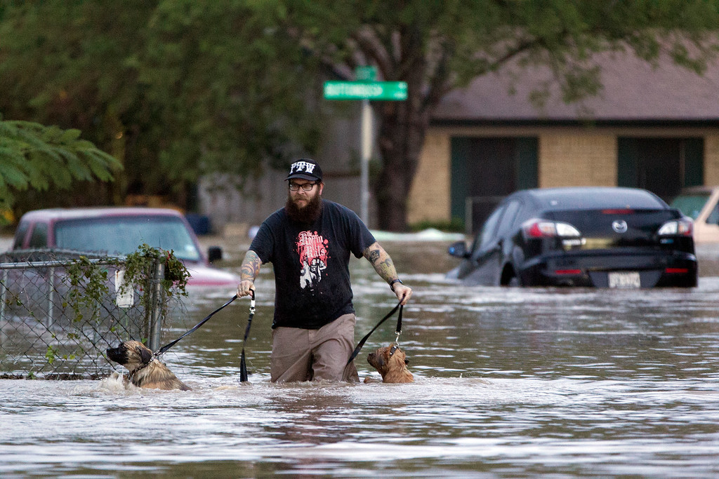 . A man walks with two dogs through floodwaters on Quicksilver Boulevard in Austin, Texas, on Thursday, Oct. 31, 2013, after heavy overnight rains brought flooding to the area. The National Weather Service said more than a foot of rain fell in Central Texas, including up to 14 inches in nearby Wimberley, since rainstorms began Wednesday.  (AP Photo/The Austin American-Statesman, Deborah Cannon)