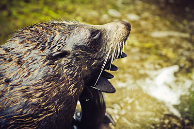 Auckland Zoo III