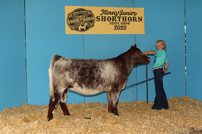 2020 Shorthorn State Show