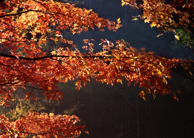 fall leaf rock creek.jpg