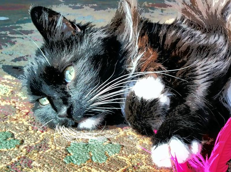 Cleo & Jessie (476).jpg