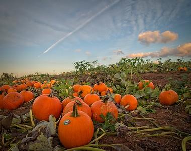 Pumpkins In Alleghany County