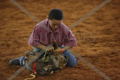 Goat tie down Jr.