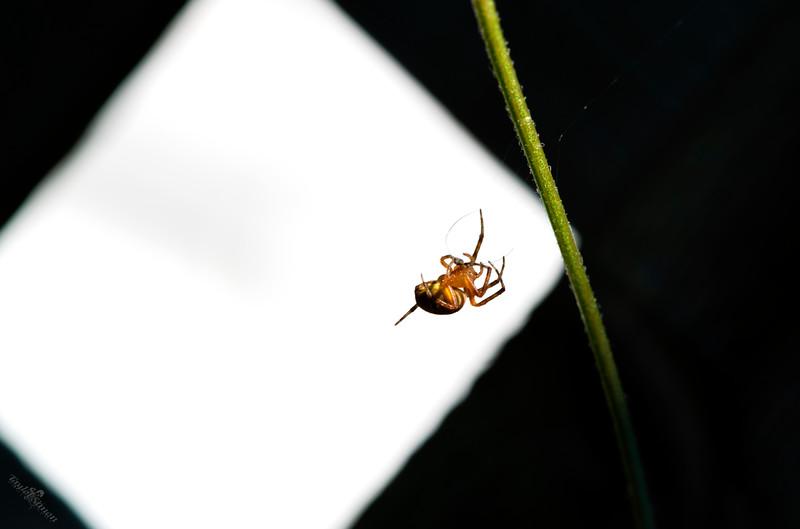 Spider art.jpg