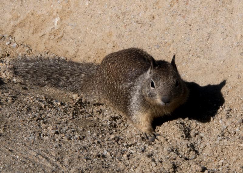 squirrel 3.jpg
