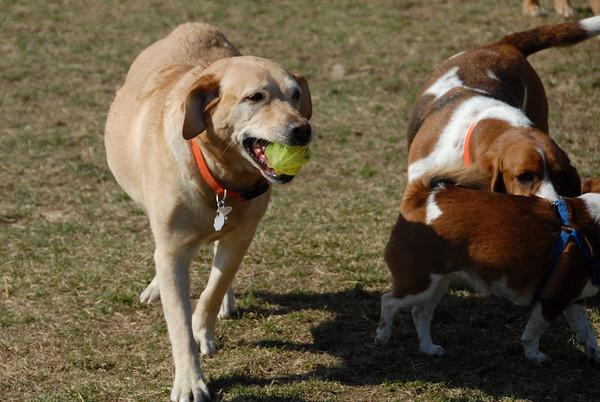 2011-03-20 Denville Dog Park Sunny Crowded Sunday