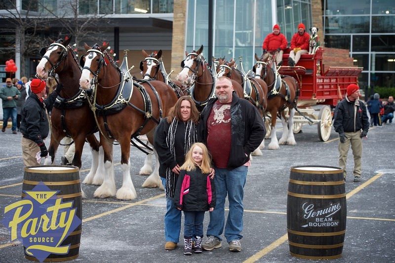 Clydesdale Portraits 64.jpg