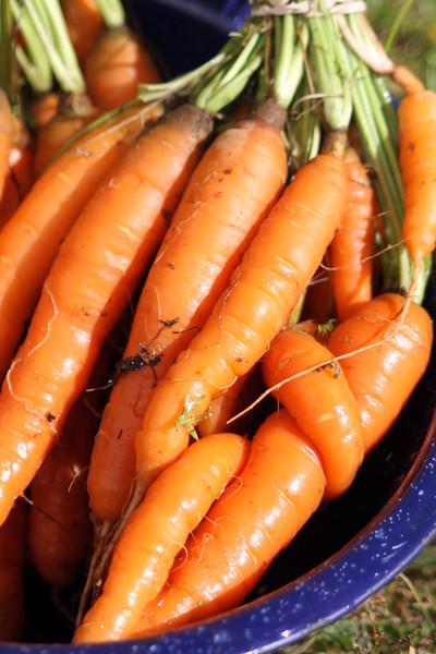 Carrots-3173601265-O.jpg