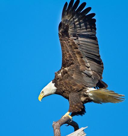 Baytown Eagles  2010_2011