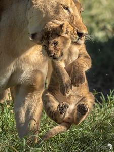 The Predators of Tanzania