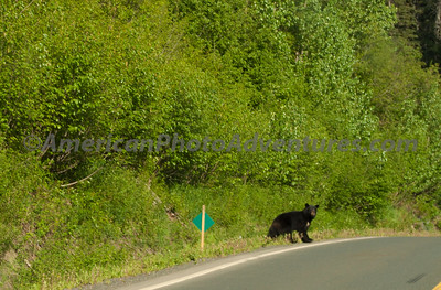 Cassier Highway - Route BC-37