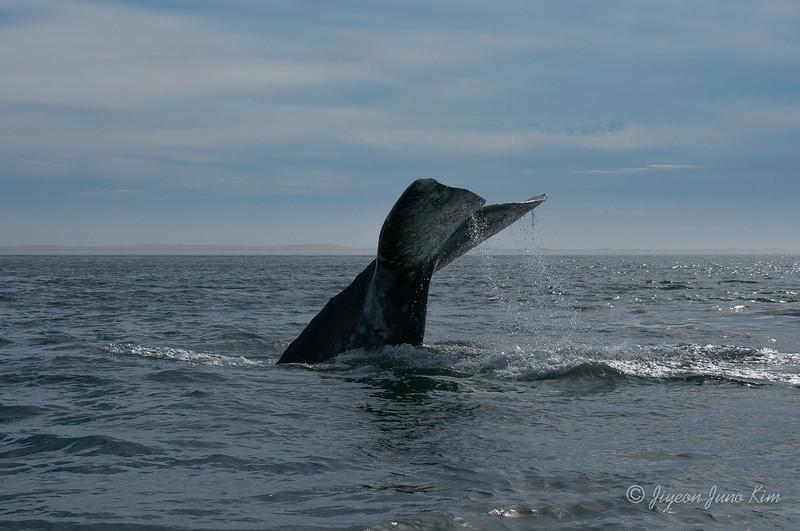Mexico-Loreto-Whale-2488.jpg