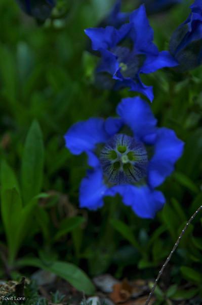 Cold Spring Garden