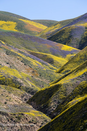 Carrizo Plain Super Bloom - 4/12/2017
