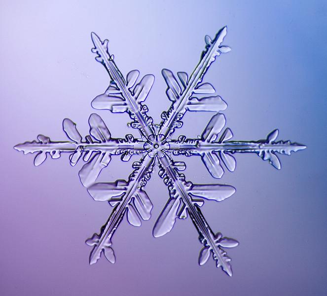 snowflake-5651-Edit.jpg