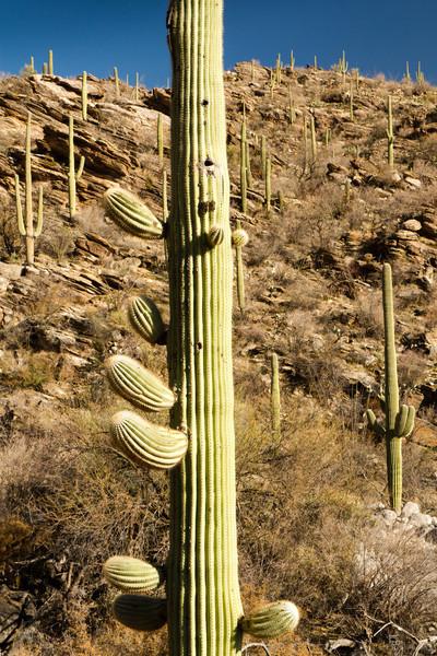 Toto je dobrý příklad krajiny, které v Arizoně říkají les.
