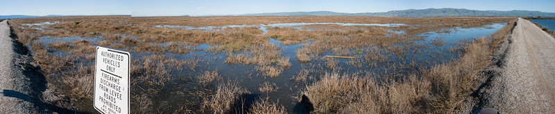 King Tide Guadalupe Slough