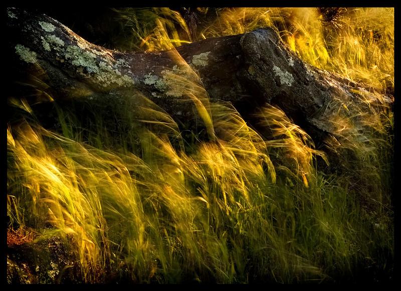 deevee splendor on the grass