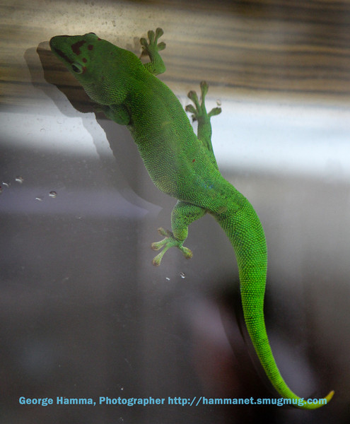 The lizards have some amazing coloration.