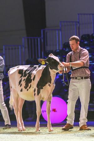 Swiss Expo 2019 Holstein