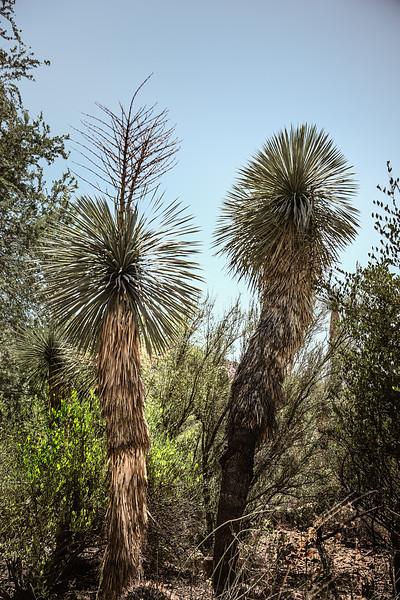 2017-10Oct-Tucson-249-Edit.jpg