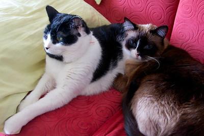 Cats 201403