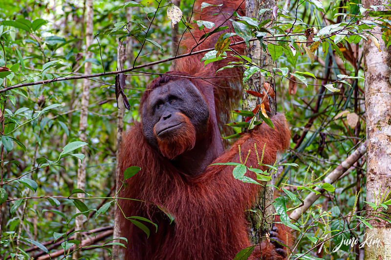 2012.10.07_Borneo_DSC_6813-Edit-Juno Kim.jpg