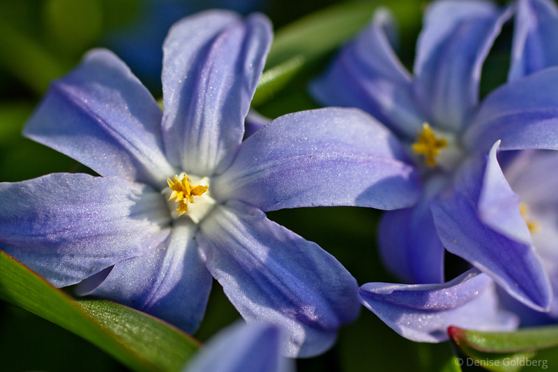 tiny, violet in color, a beauty of a blossom