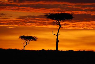 Africa - Kenya Safari 2009