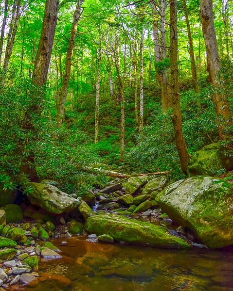 Smoky Mountains 11