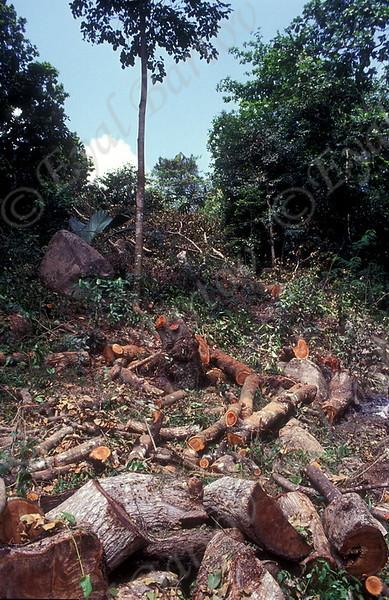 כריתת יערות 5.jpg