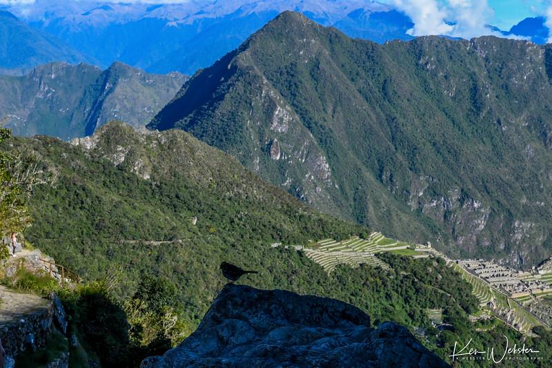 2018 Machu Picchu-102.jpg