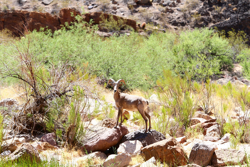 2014_Grand_Canyon_WHDW2_7D 43