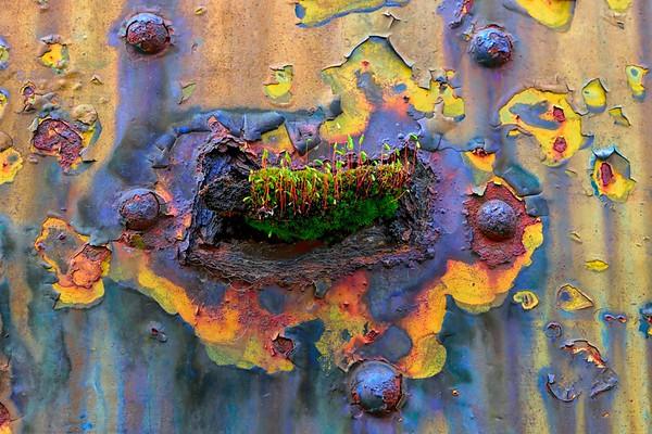 Rusted Art