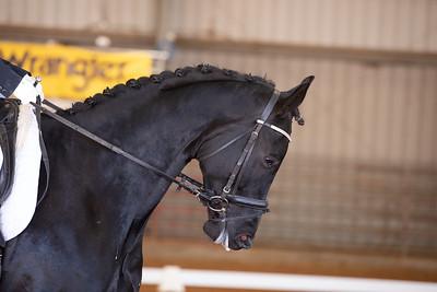 Horse 140