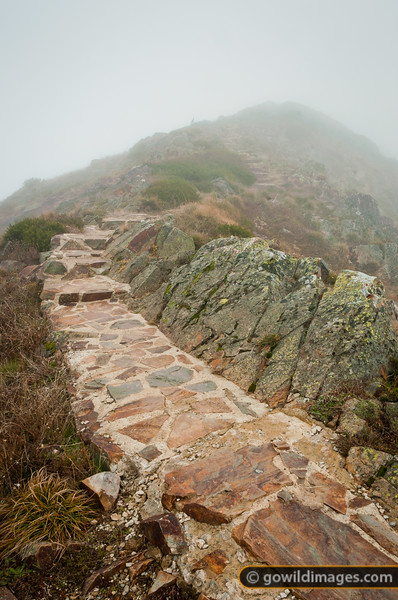 The path up to Mt Buller summit on a foggy afternoon. A Currawong (Native Australian bird) sits watching higher up.