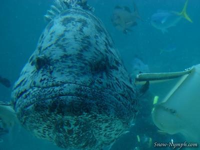 2011 (Mar 5)  Taka Dives,  Dive 1 at Challenger Bay. Dives 2 and 3 at The Cod Hole,Dive 4 (night dive) was at Challenger Bay