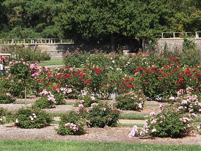 Norfolk Botanical Garden Sept 2013