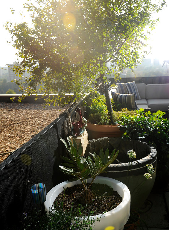 . Trimpa\'s outdoor room really took shape when he and ex-partner Anthony Montoya when they moved from growing in many small pots to sculpting the space with larger containers. (Cyrus McCrimmon, The Denver Post)