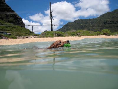 dogs swimming02.jpg