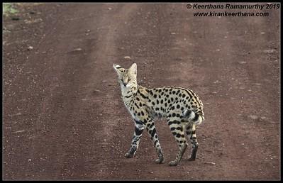 Tanzania Mammals