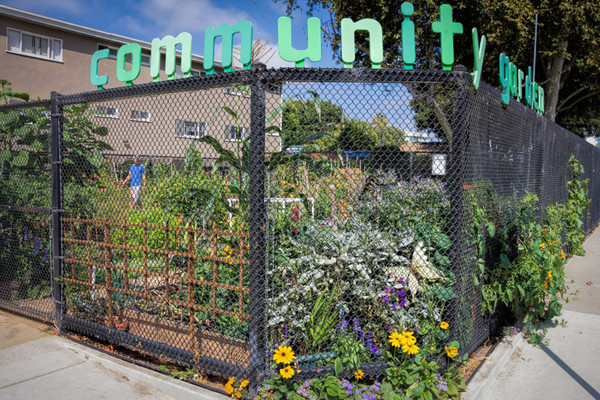 August 8 - Community Garden_ Santa Monica.jpg
