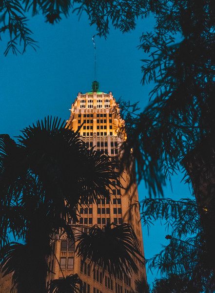 Tower life through the palms.jpg