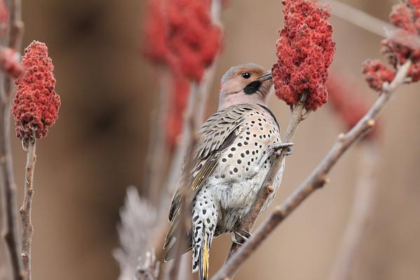 Hardy Winter Birds 2013