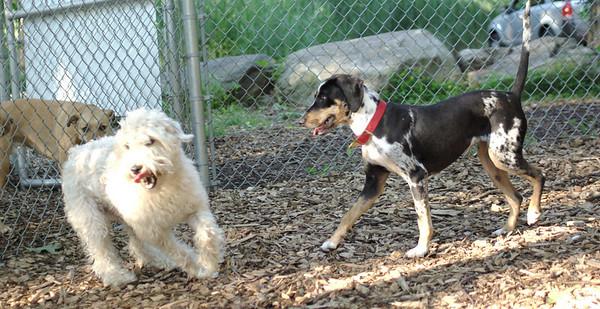 PICS JUNE 17::MILEY & BAILEY (wheaton)