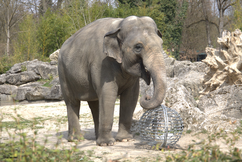Munich Tierpark, 04/04/20199 This work is licensed under a Creative Commons Attribution- NonCommercial 4.0 International License